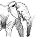 elephant_aardvark_thumb
